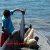 Honduras Receives Award for Promoting Responsible Fishing
