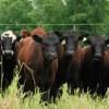 Canada to Export Beef to Honduras