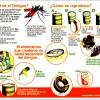 Dengue Cases Increased in Honduras during 2014