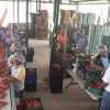 Organic Sweet Potatoes from Honduras Exported to The Netherlands