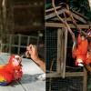 Macaw Mountain Bird Park & Nature Reserve – The Birdman of Honduras