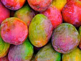 Honduras may increase production of Mangos and Avocados