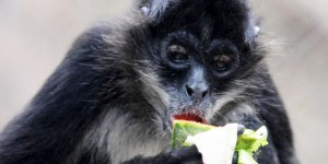 Rosy Walther Metropolitan Zoo Honduras