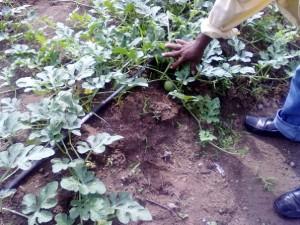 Global-Communities-USAID-Honduras-Farm-Project