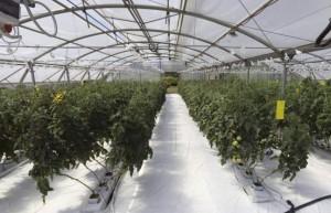 Honduras-Greenhouse