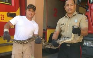 Boa Constrictor Found in Honduras
