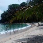 Tela, Caribbean Delight.