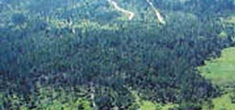 Hidden Air Strips Found in Honduras