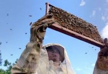 Honduran Agricultural School Promotes Safe Beekeeping Practices