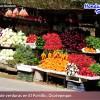 Honduras: Vegetable exports will amount to $40 million dollars