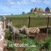 Drug Properties Seized Include Joya Grande Zoo