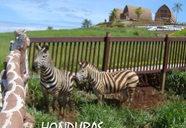 Drug Properties Seized Include Joya Grande Zoo