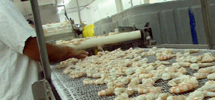 Honduras 2015 Shrimp Exports Fell 30%