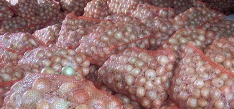 Honduras Government to Guarantee Onion Crops