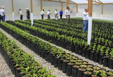 Over 8,000 citrus plants will be certified in Honduras