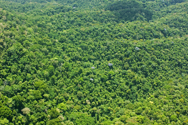 Is the fabled lost city of Ciudad Blanca hiding beneath the dense jungle canopy in Honduras? (UTL Productions, LLC)