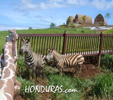 Joya Grande Zoo in Honduras will remain open.