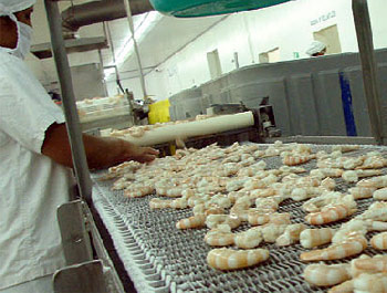 Honduran Shrimp Exports