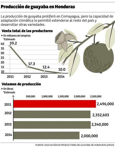 "Honduras Guava Crops ""Guayaba"" Production"