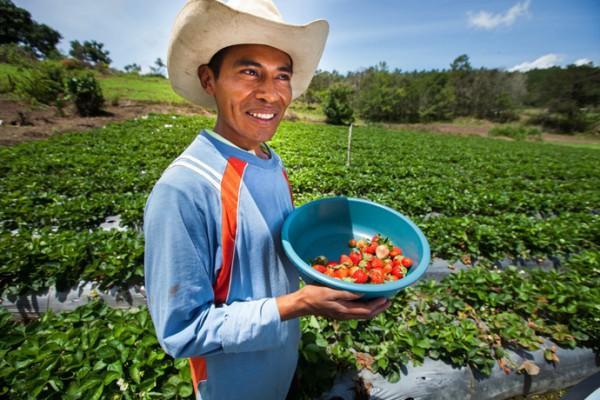 Honduras-Agriculture