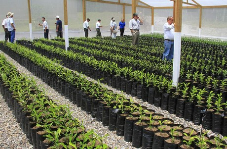 Honduras-Citrus-Plants-to-be-Certified
