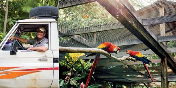 Honduras Birdman - Lloyd Davidson