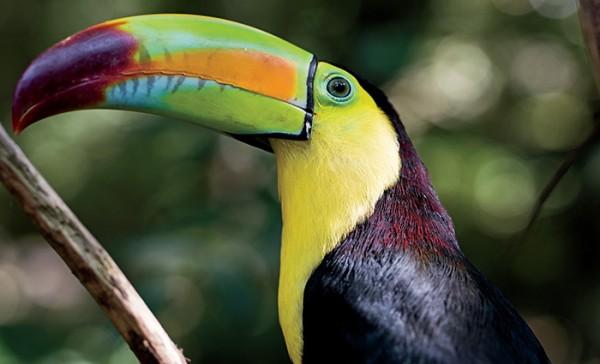 One of many bird species at Macaw Mountain Copan Honduras